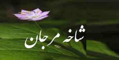 shakhai Marjan 04
