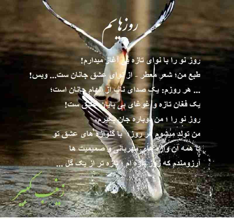 Rooze Tazah 10